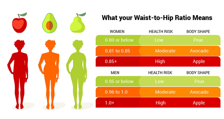 waist and hip ratio fat зурган илэрцүүд