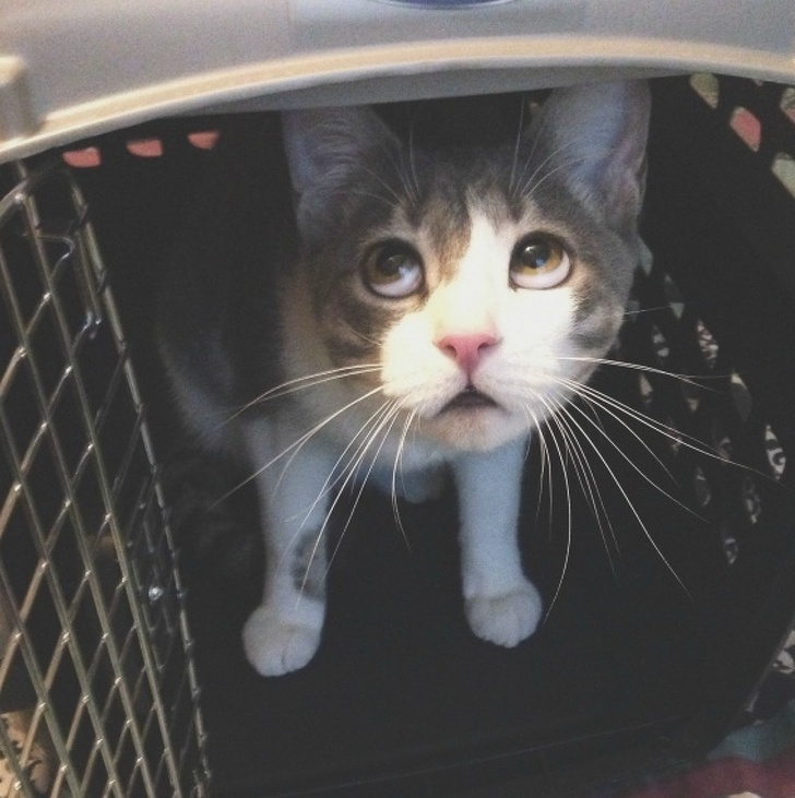 """22 """"Oops"""" Times When Visiting the Vet Didn't Go According to Plan"""